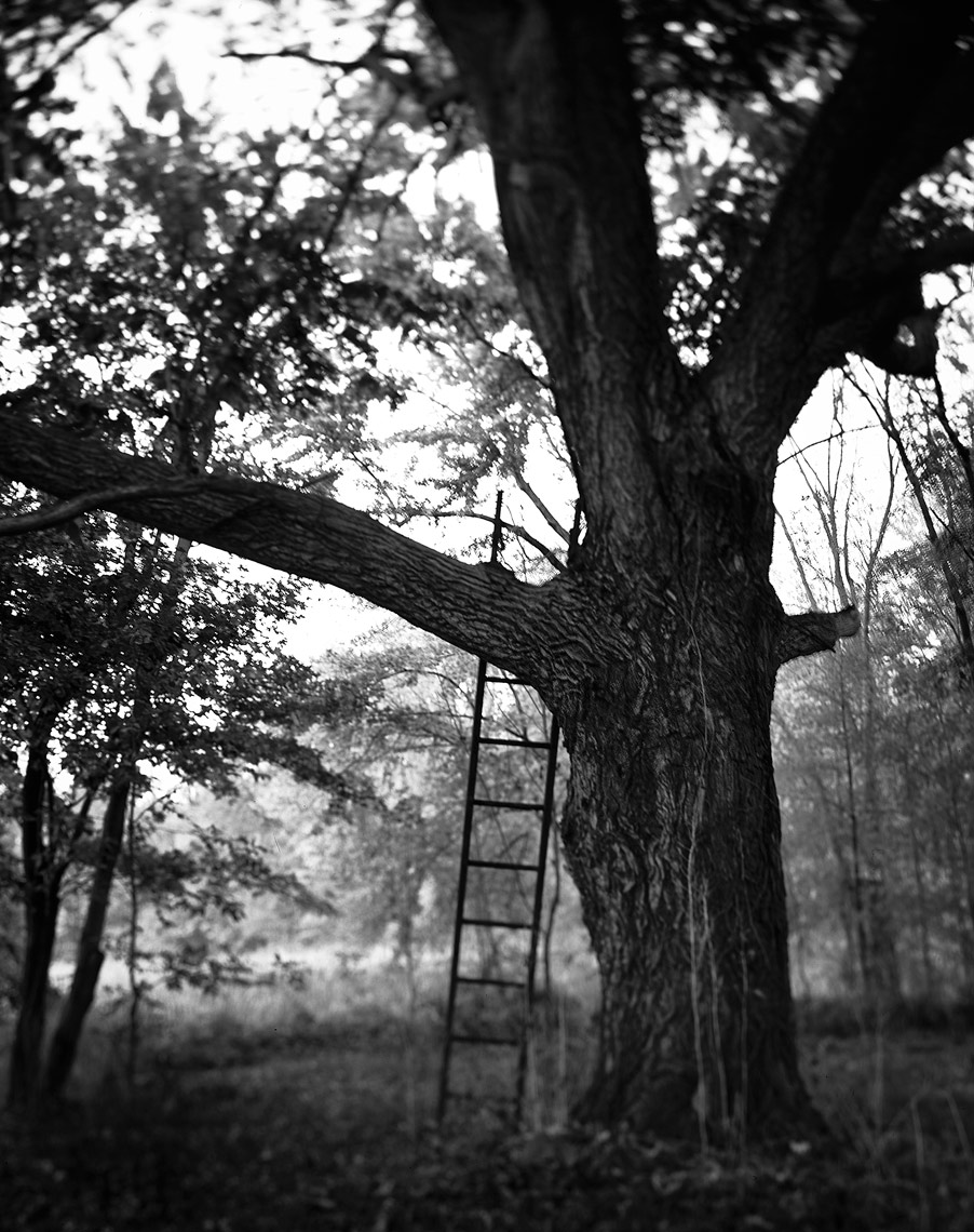 tree-ladder--b&w2